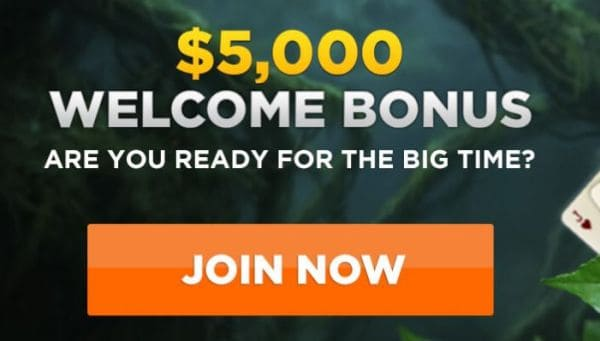Bonus at Wild Casino